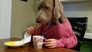 Dog With Human Hands Enjoys Breakfast - Video