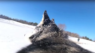 GoPro on dog's back captures excitement of snowy fun - Video