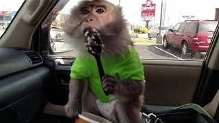 Silly Monkey Makes a Mess Over Breakfast - Video