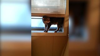 13 Cats Who Forgot How To Cat - Video