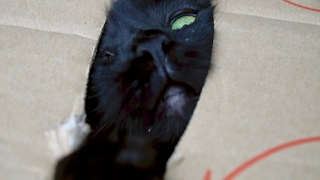 Cat becomes completely possessive when inside box - Video