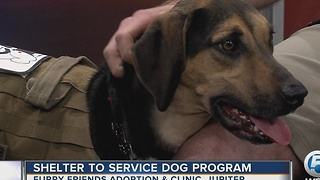 Adoption clinic partners service dog with veterans - Video