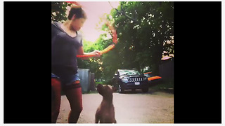 Dog hates hula hoop, refuses to let owner use it - Video