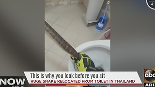 Snake found in Thailand toilet - Video