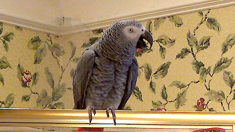 Could this parrot be the White House Whistleblower?
