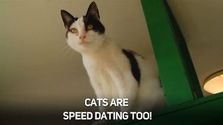 Speed dating for cats: Find your PURR-fect match! - Video