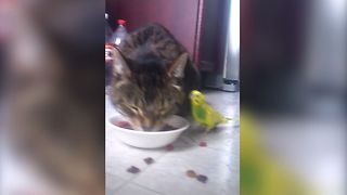 Sweet Cat Shares Food With Bird - Video