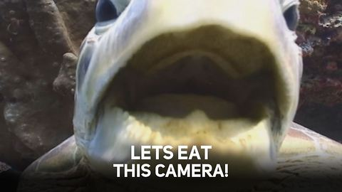 Sealife vs Camera Crew: Top 10 Cutest Attacks