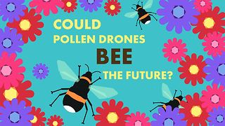 Wildlife Day: Will drones make bees unnecessary? - Video