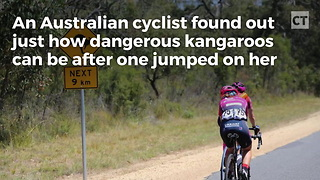 Cyclist Caught Off-guard, Eats Pavement After Kangaroo Comes Out Of Nowhere - Video