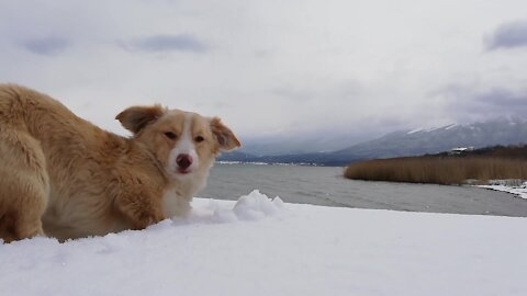 Rescued puppy's first winter adventure is absolutely breathtaking