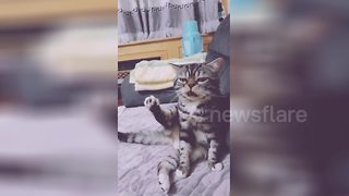 This Cat Has The Funniest Reaction When It Tastes Its Own Leg - Video