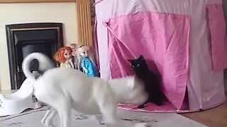Cat defends princess castle from invading dog