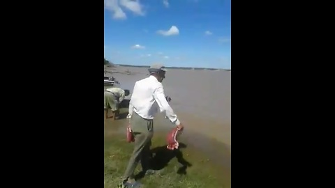Piranha Invade Brazil River - Old Man Feeding Piranha With Meat and Finished in Second