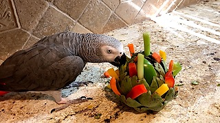 Talking parrot destroys artichoke foraging toy - Video