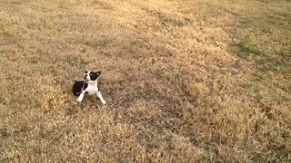 Cute Puppy Fails At Leash Training - Video