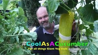 British Man Unveils World's Largest Cucumber - Video