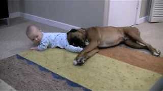 Boxer And Baby Share Adorably Precious Friendship