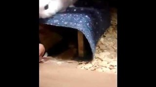 There Can Only be One Cute Bunny in This Household - Video