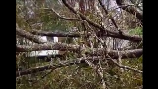 Florida Residents Survey Downed Trees After Hurricane Michael Passes Through - Video