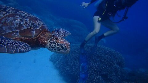 Scuba Divers Get Up Close And Personal With A Playful Sea Turtle In The Great Barrier Reef