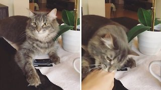 Cash conscientious cat stops owner getting hold of credit card