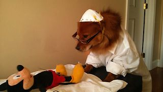 The Cutest Doggy Doctor Of All Time - Video