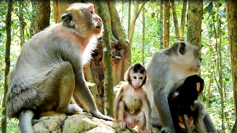 Baby Monkey Need To Play Now Mom Let Go Play