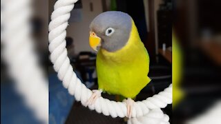Parrot whistles and blows kisses
