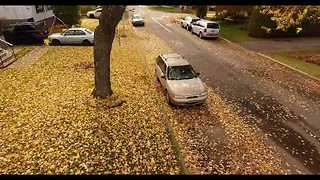 Drone Leaf Blower Life Hack - Video