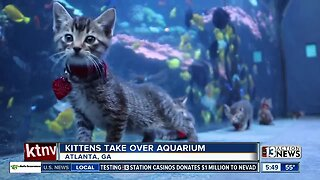 TRENDING: Kittens take over aquarium in Atlanta