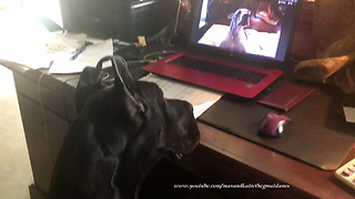 Great Dane Watches Great Dane You Tube Video