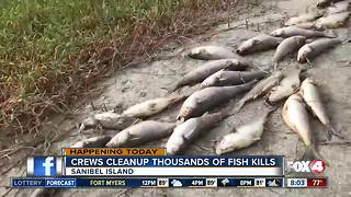 Crews continue to remove thousands of dead fish off Sanibel Island - 8am live report - Video