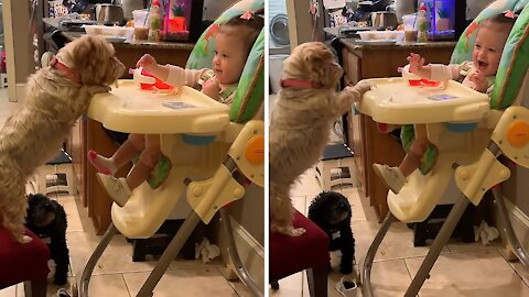 Baby and doggy have an adorable feeding arrangement