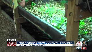 Kansas City community garden looking to be first urban agriculture franchising model - Video