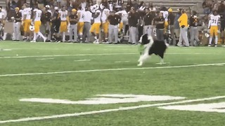 Kicking Tee-Retrieving 'Wonder Dog' Steals the Show at University Football Game - Video