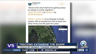 Katharine the great white shark returns to South Florida