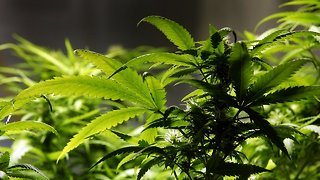 This Bill Would Decriminalize Marijuana In The US