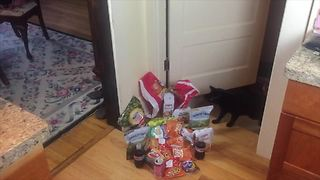 Jumping cat leaps over various snack items - Video