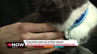 Troy police want cat as their mascot - Video