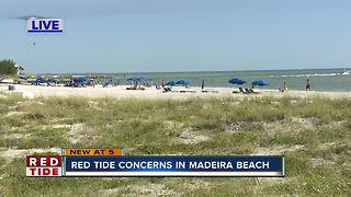 Red tide concerns in Madeira Beach