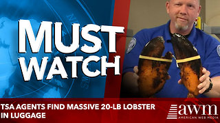 TSA Agents Find Massive 20-lb Lobster In Luggage - Video