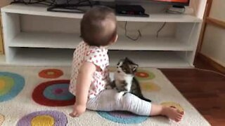 Kitten desperately tries to play with baby