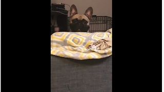 Happy dog smiles when owner laughs - Video