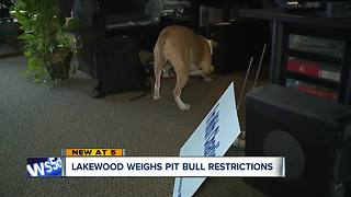 Lakewood weighs pit bull restrictions