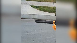 Little Dude Vs. Giant Leaf Blower - Video