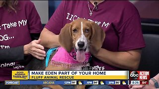 Rescues in Action June 23 | Eden needs a home