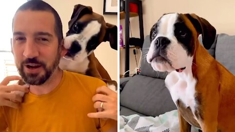 Ever seen a boxer puppy backpack infomercial?