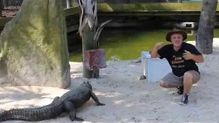 Gator Enthusiast Tries Out Cosplaying in the Enclosure - Video