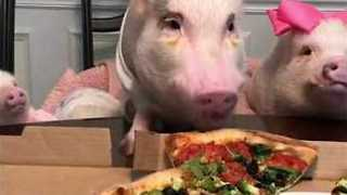 Hungry Pets Celebrate Pizza Day Over A Dinner Party - Video